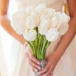 MORS Wedding Tulip